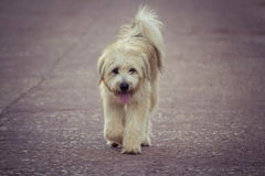 Homeless dog Stock Photography