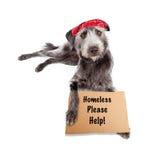 Homeless Dog Wearing Bandana With Sign Stock Photo