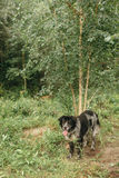 Homeless dog in the woods. Royalty Free Stock Photography