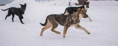 Homeless doggy run at snow street. Outdoor photo. Stock Photography