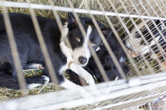 Homeless dogs in cages Stock Image