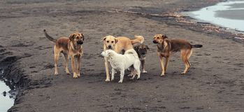 Homeless dogs on sea shore royalty free stock photography