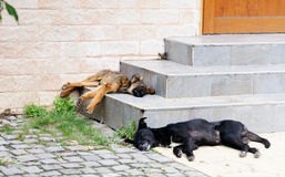 Homeless dogs sleeping Royalty Free Stock Image