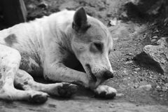 Homeless dogs Royalty Free Stock Photos
