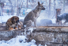 Homeless dogs in winter. Time heating on sanitaryware well royalty free stock images
