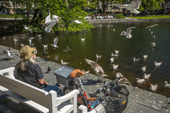 Homeless feeding the seagulls  Stock Images
