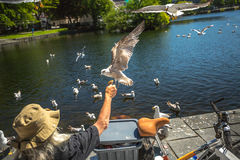 Homeless feeding seagulls  Stock Photo