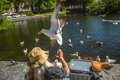 Homeless feeding seagulls  Stock Photography