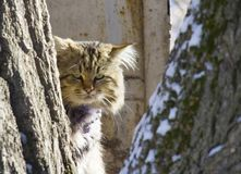 Homeless fluffy cat between trees. sad look. A homeless fluffy cat between trees. sad look . abandoned animals concept royalty free stock photo