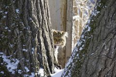 Homeless fluffy cat between trees. sad look. Animals in winter concept stock photography