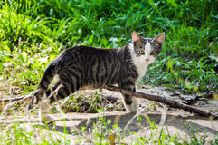 Homeless frightened cat. On nature summer background Stock Image