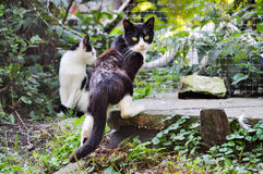 Homeless frightened cats Royalty Free Stock Photography
