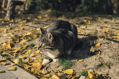 Homeless funny kitten looking intrested on yellow fall leaves stock image