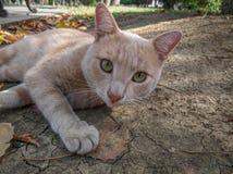 Homeless ginger beautiful cat royalty free stock photo