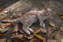Homeless ginger beautiful cat royalty free stock photos