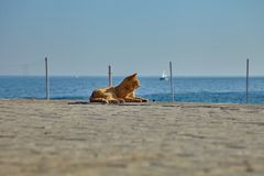 Homeless ginger cat basking in the sun on the seacoast royalty free stock photo