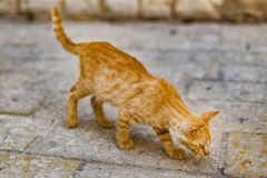 Homeless ginger cat stock image