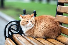 Homeless ginger cat. On a wet bench Royalty Free Stock Photo