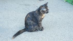 A homeless gray kitten in the street. 4k stock video