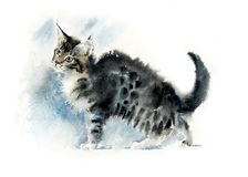 Fluffy gray kitten. Watercolor hand painted illustration royalty free illustration