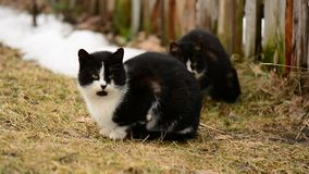 Homeless hungry cats sitting on the grass in the village. Animals stock video footage