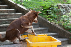 Homeless hungry dog � Stock Photos
