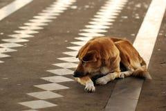 Homeless and hungry dog Stock Image