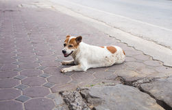 Homeless and hungry dog abandoned on the streets Royalty Free Stock Photo