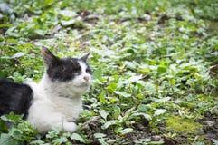 Lonely stray cat Royalty Free Stock Photos