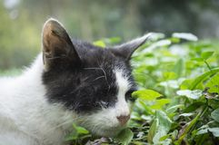 Pitiful homeless cat Stock Photos