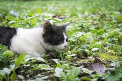 Pitiful stray cat Royalty Free Stock Photos