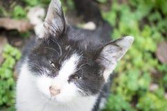 sad kitten Stock Image