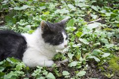 ill homeless cat Royalty Free Stock Images