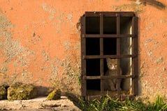 Homeless kitten Stock Images