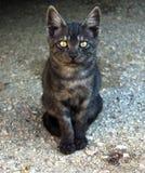Homeless kitten Royalty Free Stock Images