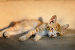Homeless kitten Royalty Free Stock Image