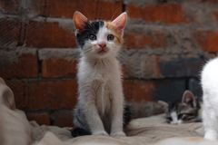Homeless Kitten, alone, cat, cats. street. need friends. Cat father and mother cat with kitten, street cats, selective focus royalty free stock photo
