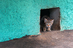Homeless kitten cat looking from a cellar hole. Stock Photos