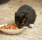 Homeless kitten eats food. With caution Royalty Free Stock Images