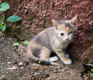 Homeless kitten, without an eye Royalty Free Stock Photos