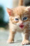 Homeless Kitten hungry Royalty Free Stock Photography