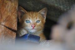 Homeless kitten Stock Photo