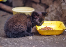 Homeless kitten on the street stock photography