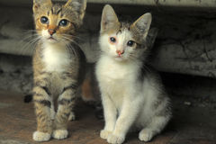 Homeless kittens Royalty Free Stock Images