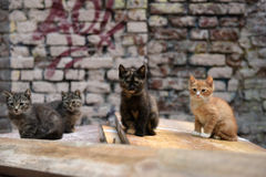 Homeless kittens Royalty Free Stock Photography