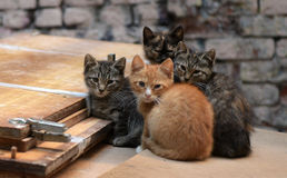 Homeless kittens Royalty Free Stock Image