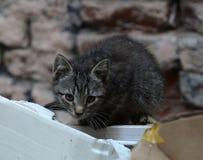 Homeless kittens Royalty Free Stock Photos