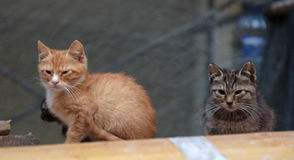 Homeless kittens Royalty Free Stock Images
