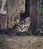 Homeless Kitty Stock Photos