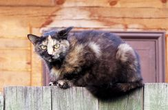 Homeless cat on wooden fence angrily looking into the camera lens. Homeless kitty on wooden fence. Cat angrily looking into the camera lens, close-up stock photo